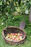 Harvest in Hobbit garden Stock Photo
