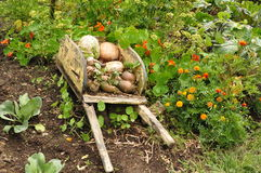 Harvest in Hobbit garden Stock Photos
