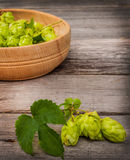 Harvest of hops Stock Image