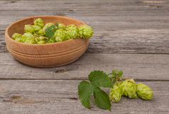 Harvest of hops Royalty Free Stock Photography