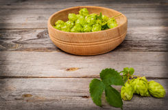 Harvest of hops Royalty Free Stock Photo