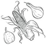 Harvest illustrations: gourds and corn Royalty Free Stock Photography