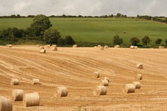 Harvest in ireland, cork county. Harvest time at the end of the irish summer, cork county Royalty Free Stock Photo