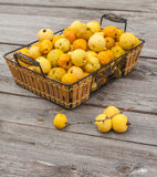 Harvest Japanese quince  on a wooden table Stock Image