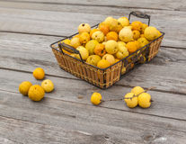 Harvest Japanese quince  on a wooden table Royalty Free Stock Images
