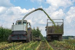 Harvest of juicy corn silage by a combine harvester and transportation by trucks, for laying on animal feed royalty free stock photos