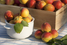 A harvest of juicy ripe apricots Stock Photo