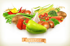 Harvest juicy and ripe vegetables Royalty Free Stock Image