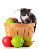 Harvest Kitty Royalty Free Stock Image
