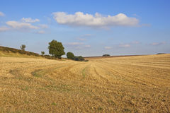 Harvest landscape in autumn. Harvested wheat fields with trees and hedgerows in a picturesque setting in the yorkshire wolds england under a blue sky with fluffy Royalty Free Stock Photos