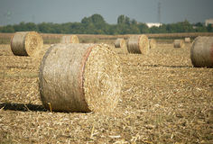 Harvest landscape Royalty Free Stock Image