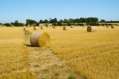 Harvest landscape near Tetbury, Gloucestershire, UK Stock Images
