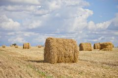 Harvest landscape with straw bales amongst fields in autumn. In a cloudy day, Russia, Ukraine, Belarus Royalty Free Stock Image