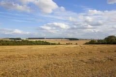 Harvest landscape Royalty Free Stock Images