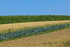 Harvest. Landscape with a variety of grown field bevore harvest Royalty Free Stock Photography