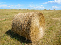 Harvest. Large field after harvest. In the foreground round MOP Royalty Free Stock Image