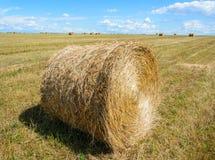 Harvest Royalty Free Stock Image