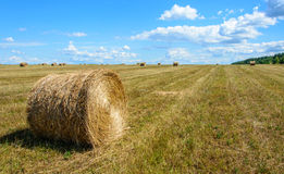 Harvest. Large field after harvest. In the foreground round MOP of straw Stock Photos