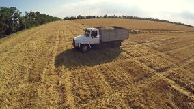 Harvest. Large truck transport grain from the field. Transportation of cereal crops. Large truck transport grain from the field stock footage