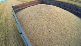 Harvest. Large truck transport grain from the field. stock video