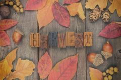 Harvest letterpress with frame of autumn leaves over wood. Harvest spelled with wooden letterpress with frame of leaves on a rustic wood background. Faded Stock Photo