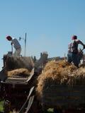 Harvest Stock Image