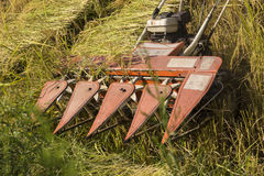 Harvest machine  paddy rice Stock Photo