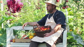 Harvest. Man with fresh vegetables in a box stock footage