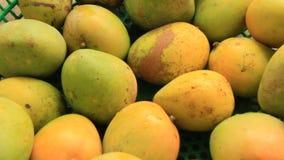 Harvest mango in the garden. The harvest mango in the garden stock footage
