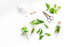 Harvest medicinal herb. Leaves, bottles and sciccors on white background top view Stock Photos