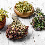 Harvest of medicinal herbs and plants Royalty Free Stock Photo