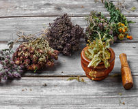 Harvest of medicinal herbs and plants Royalty Free Stock Image