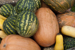 Harvest melons. Watermelons, pumpkins and squash folded slide, close-up Stock Images