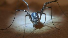 Harvest men arachnid female cleaning its legs stock video footage