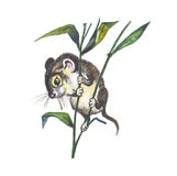 Harvest Mouse. (Micromys minutus). Hand drawing Royalty Free Stock Image