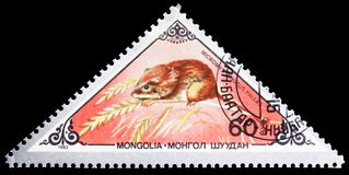 Harvest Mouse (Micromys minutus), Various mammals serie, circa 1983. MOSCOW, RUSSIA - SEPTEMBER 26, 2018: A stamp printed in Mongolia shows Harvest Mouse ( royalty free stock photos