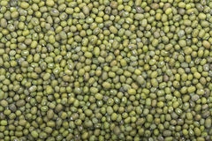 Harvest of mung beans Stock Image
