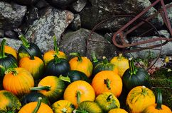 Harvest in New England Stock Photo