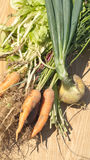Harvest of onion, carrot and green salad closeup Stock Images