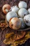 Harvest onion Royalty Free Stock Image
