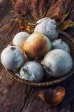 Harvest onion Stock Images