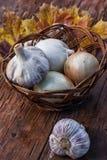 Harvest onion Royalty Free Stock Photo
