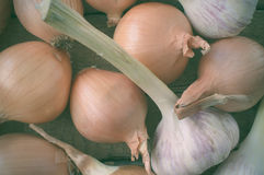 Harvest onions and garlic in a wooden box Stock Image