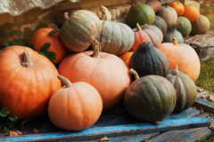 Harvest of organic pumpkins in countryside, vintage style and rustic background. Halloween theme or autumnal vegetable market. Royalty Free Stock Photography