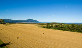 Harvest on orlean island Royalty Free Stock Images