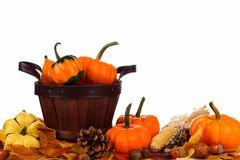 Harvest pail filled and surrounded by autumn pumpkins over white Royalty Free Stock Photo