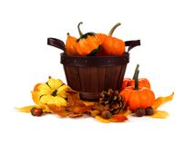 Harvest pail filled and surrounded by autumn pumpkins over white Stock Image