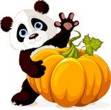 Harvest Panda. Cute little panda holding giant pumpkin Stock Images