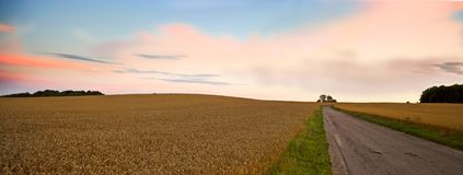 Harvest panorama at sunset. Panorama of farmland in harvest Stock Photo