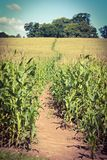 Harvest path Royalty Free Stock Images
